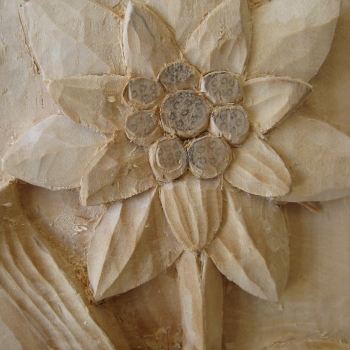 Flor pirenaica Edelweiss